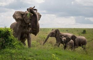 Travel, Safari, African safari, Prepare for safari, elephant, safari safety